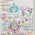 Patogénesis del SARS-CoV-2 (I)