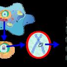 Localización del ADN (I)