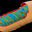 Mitocondria (I)